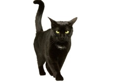 Black cat moves