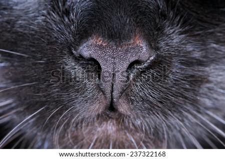 Black cat nose. Macro shooting.