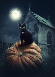 Black cat on a pumpkin