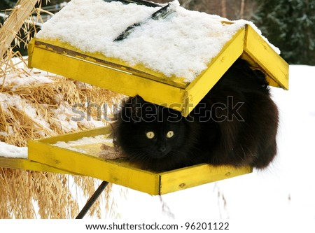 Black cat on a yellow bird's feeder