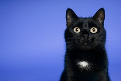 Black cat on blue background. Friday the 13th