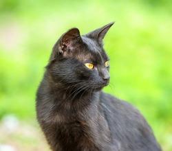 black cat on green grass