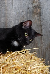 black cat on straw