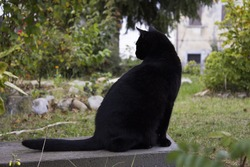 Black Cat on the bench