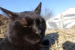 black cat on the hay