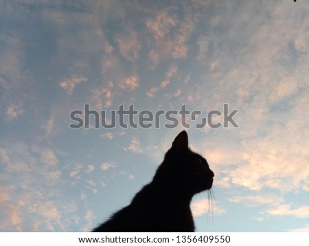 Black cat on the peak and the sky in the morning. #1356409550