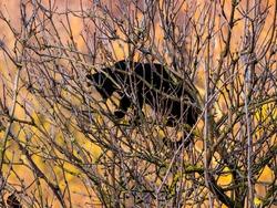 Black cat on the tree