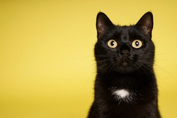 Black cat on yellow background. Friday 13th