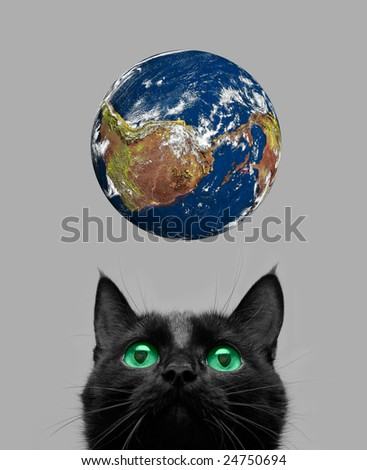 Black cat playing with earth planet on grey