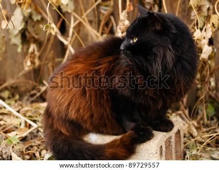 black cat portrait in autumn garden
