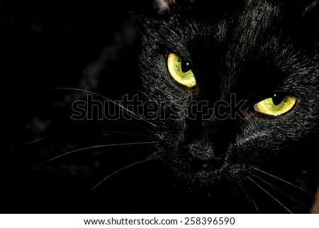 Black cat portrait on black background.