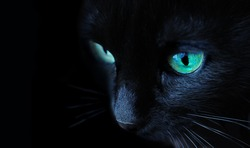 black cat portrait side view with green eyes closeup macro on black background