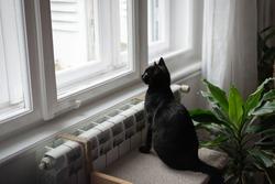 Black cat portrait small black domestic cat looking through window in Covid-19 lockdown 2020 cat looking through window