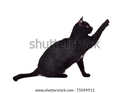 Black cat reaching up for toy and showing its claws