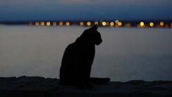 black cat silhouette at sunset