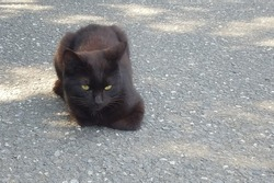Black cat sit and think about something