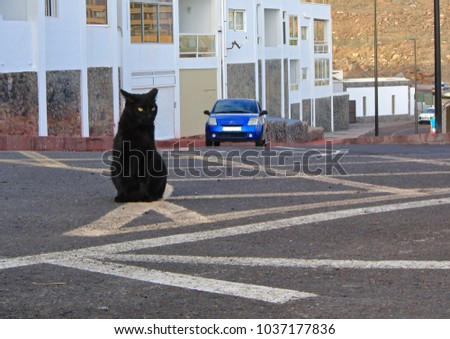 Black cat sitting in the middle of the city road on road marking lines.