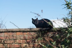 Black cat sitting on a wall