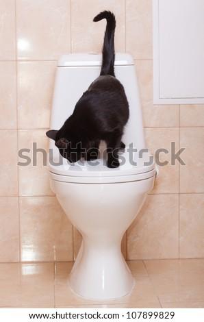 Black cat sitting on human toilet, close up - stock photo