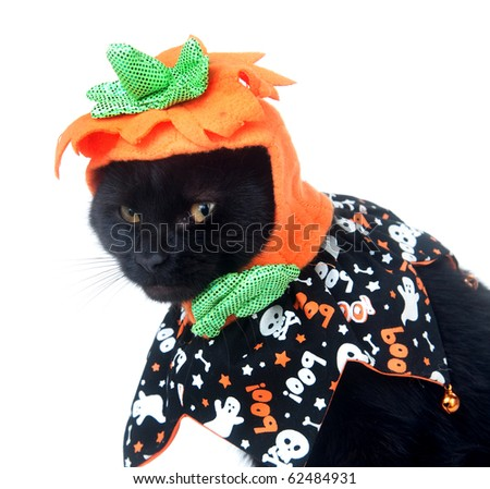 Black cat sitting on white background with pumpkin hat and Halloween costume