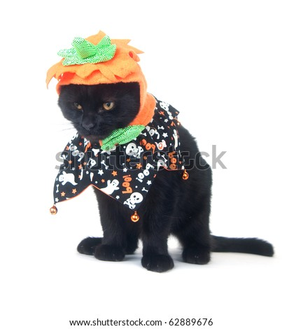 Black cat sitting on white background with pumpkin hat and Halloween costume - stock photo