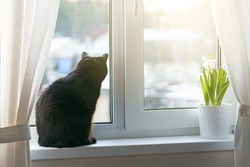 Black cat sitting on window sill against sunlight and looking outside