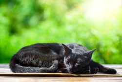 Black cat sleep in sunny day with green bokeh background , cat portrait is summer garden background.