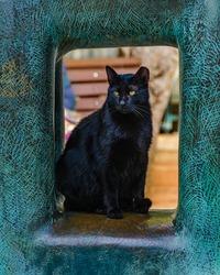 Black cat standing under modern sculpture, tel aviv, israel