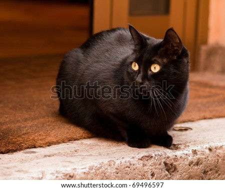 Black Cat Staring - stock photo