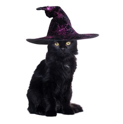 Black cat wearing witch halloween hat sitting on white background