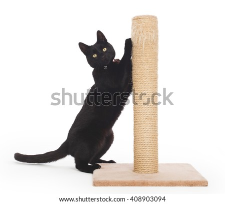 Black cat with a scratching post isolated on white #408903094