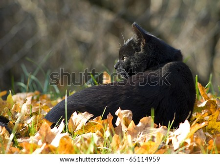 Black cat with autumn leaves