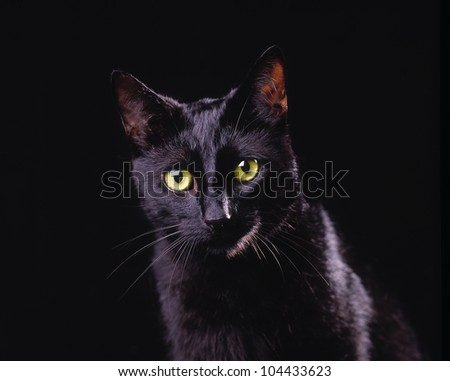 Black cat with bright yellow eyes
