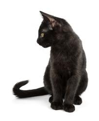black cat with elegant tail