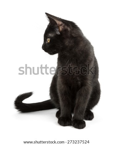 black cat with elegant tail
