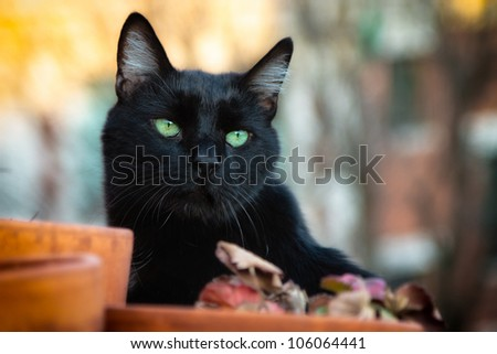 Black cat with green eyes on a rooftop