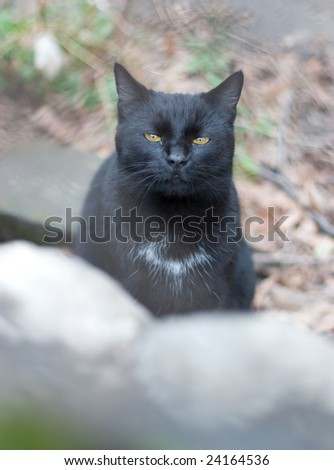 Black cat with half closed eyes