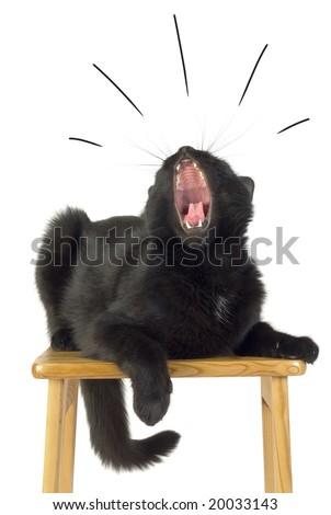 Black Cat with open Mouth.