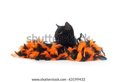 Black cat with orange and black feather decorations for halloween