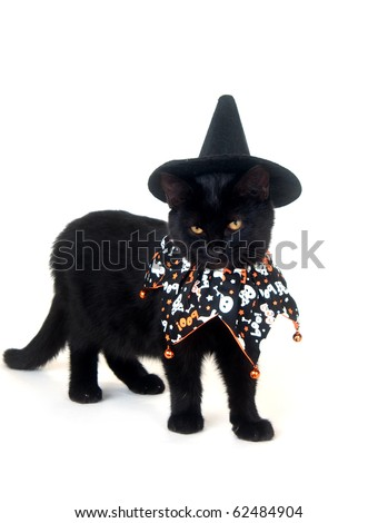 Black cat with witch hat and Halloween bib on white background