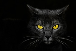 Black cat with yellow eyes. Cute black cat looking me. Black cat in dark.