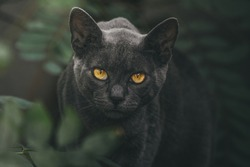 Black cat with yellow eyes sit on the tree