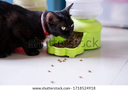 Black cats feed pellet food from an automatic feeder. ストックフォト ©