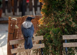 black crow sitting on a fence in the streets of a big city
