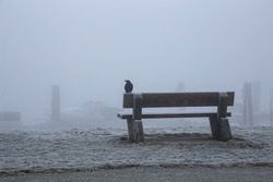 Black crow sitting on top of a bench in front of a quay with boats. Taken during a foggy morning in Pitt Lake, BC, Canada.