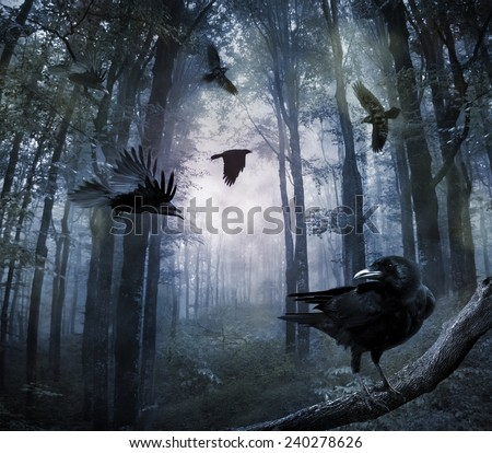 Stock Photo black crows flying in the forest in the night