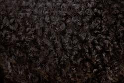 black curly fur close up