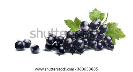 Black currant branch fresh isolated on white background as package design element Foto stock ©