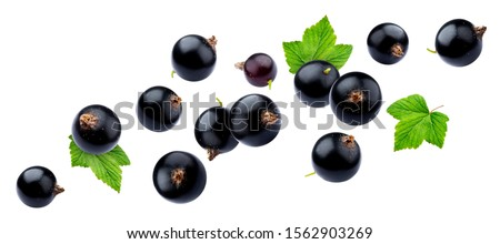 Black currant collection isolated on white background close-up, with clipping path, falling juicy berries of blackcurrant with fresh leaves Foto stock ©