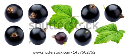 Black currant collection isolated on white background close-up, with clipping path, ripe juicy berries of blackcurrant with fresh leaves